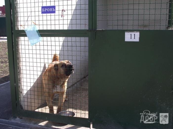 петля для ловли собак купить в москве