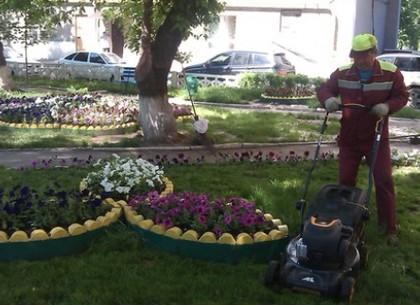 По дороге к скверу «Стрелка» высадили тысячи цветов + (видео)