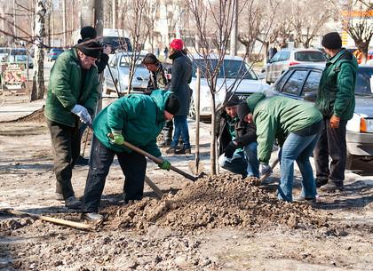 В Харькове посадят много новых деревьев