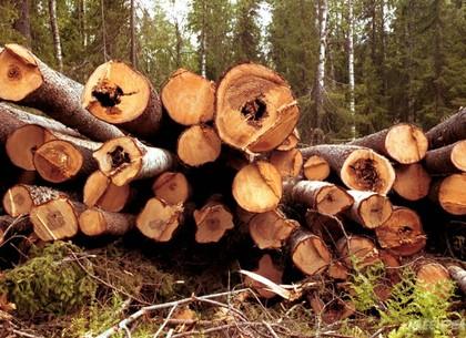 «Привет темным лесорубам»: Гройсман пообещал настоящие сроки законтрабанду леса