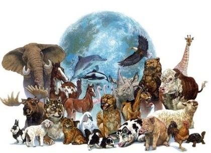 День биологического разнообразия: события 22 мая - РЕДПОСТ