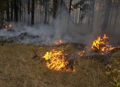 Спасатели Харьковщины напоминают об опасности лесных пожаров