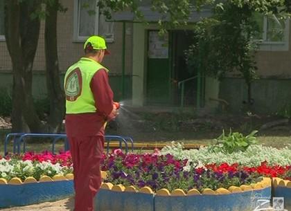 Какой двор коммунальщики Московского района представят на городской конкурс