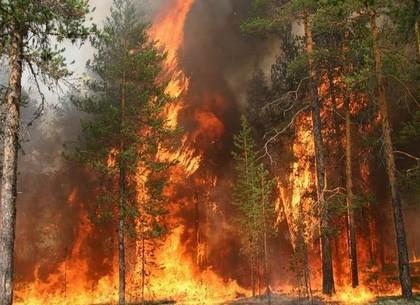 ВХарьковской области полыхает лес площадью 70 га