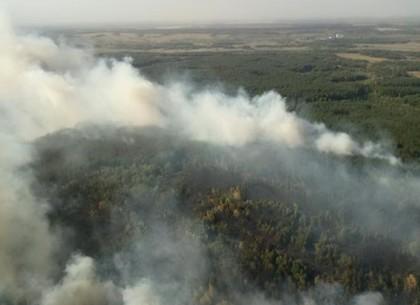 На Харьковщине горят леса