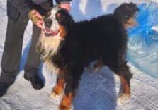 Найденная в заснеженном лесу собака сама туда убежала (ВИДЕО)