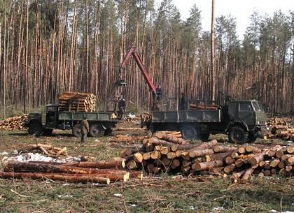 В Харькове освобождают лесничего после приезда Зеленского