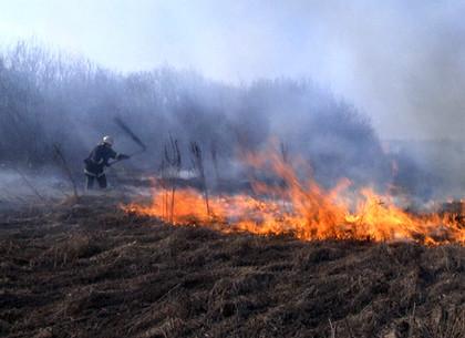 Жара и небрежность к огню стоили 20 гектаров выжженной стерни