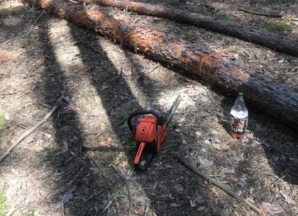 В лес – с бензопилой: рачительного хозяина остановили правоохранители