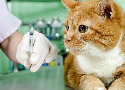 Время вакцинировать домашних питомцев от бешенства: харьковчан призывают быть сознательными