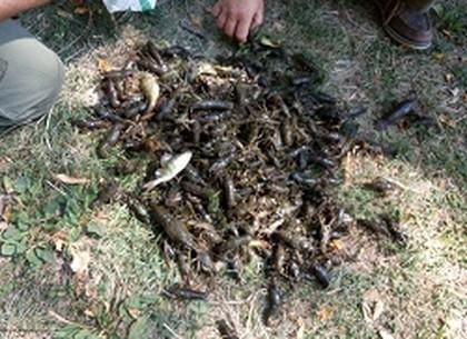 Рыбпатруль изъял 5 кг незаконно добытых раков