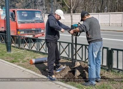 Деревья в Харькове высаживают и поливают «неправильно» - замминистра Парцхаладзе
