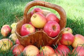 Традиционный яблочный пленэр AppleіnAir прйдет в Сковородиновке