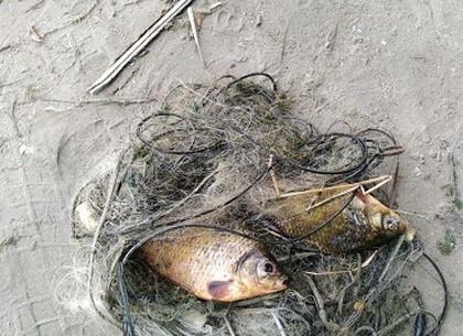 Под Харьковом браконьер выловил две краснокнижные рыбины