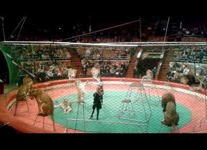 Министерство культуры прекращает покупать животных для харьковского цирка