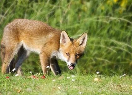 Грибников попросили не таскать домой лекарства от бешенства для диких животных