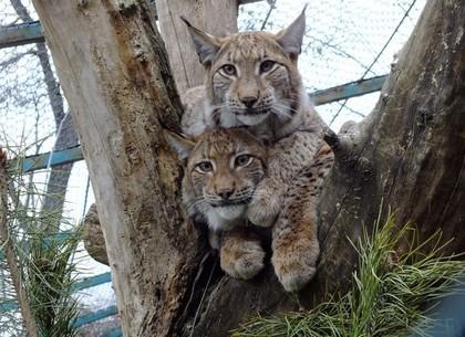 Сотрудники харьковского зоопарка провели новый квест
