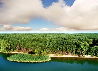 Под Харьковом разворовывался лесной фонд