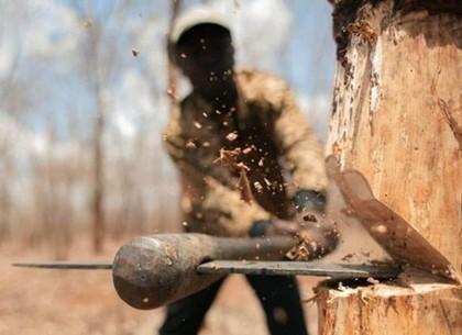 Черные лесорубы: мастера леса и лесничий могут сесть за халатность