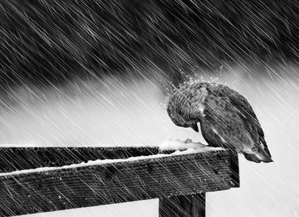 Сильный ветер и мокрый снег: харьковчан предупредили о непогоде