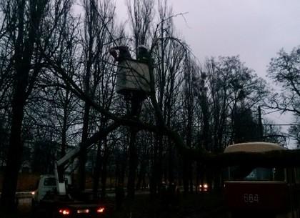 В Харькове устраняют последствия ночного урагана