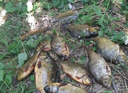 Краснокнижную рыбу ловил браконьер под Харьковом