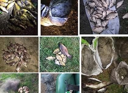 Какой ущерб нанесли рыбные браконьеры в июле