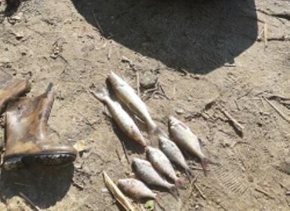 Браконьерский улов почти на две тысячи гривен: ФОТО