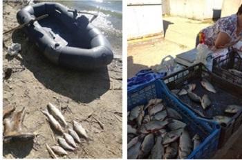 Рыбнадзор подсчитал убытки от браконьеров