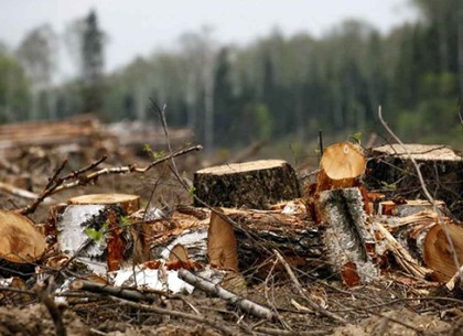 Поджеги лесов могут быть попыткой скрыть массовые незаконные вырубки от прокурорских проверок