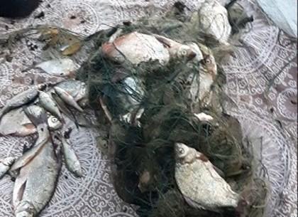 Рыболов-браконьер нанес ущерб в пять тысяч гривен