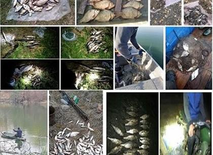 Харьковские браконьеры «наловили» штрафов почти на 50 000 грн. (рыбоохранный патруль)