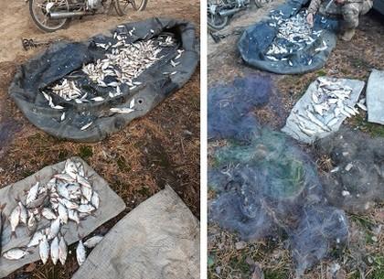 Рыбный браконьер наловил мелкой рыбешки на 40 тысяч гривен (Рыбнадзор)