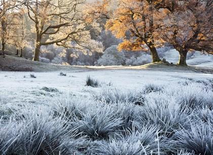 Первый заморозок ноября стал рекордом (Гидрометцентр)