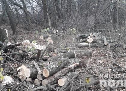 ФОТО: У черного лесоруба отобрали заготовленные дрова (МВД)