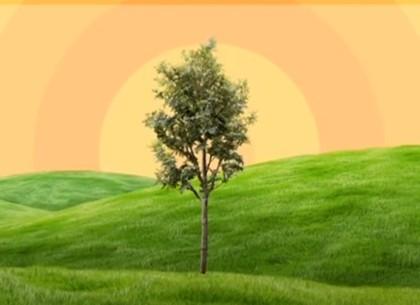 «Утро с Интером»: как деревья могут остановить глобальное потепление?