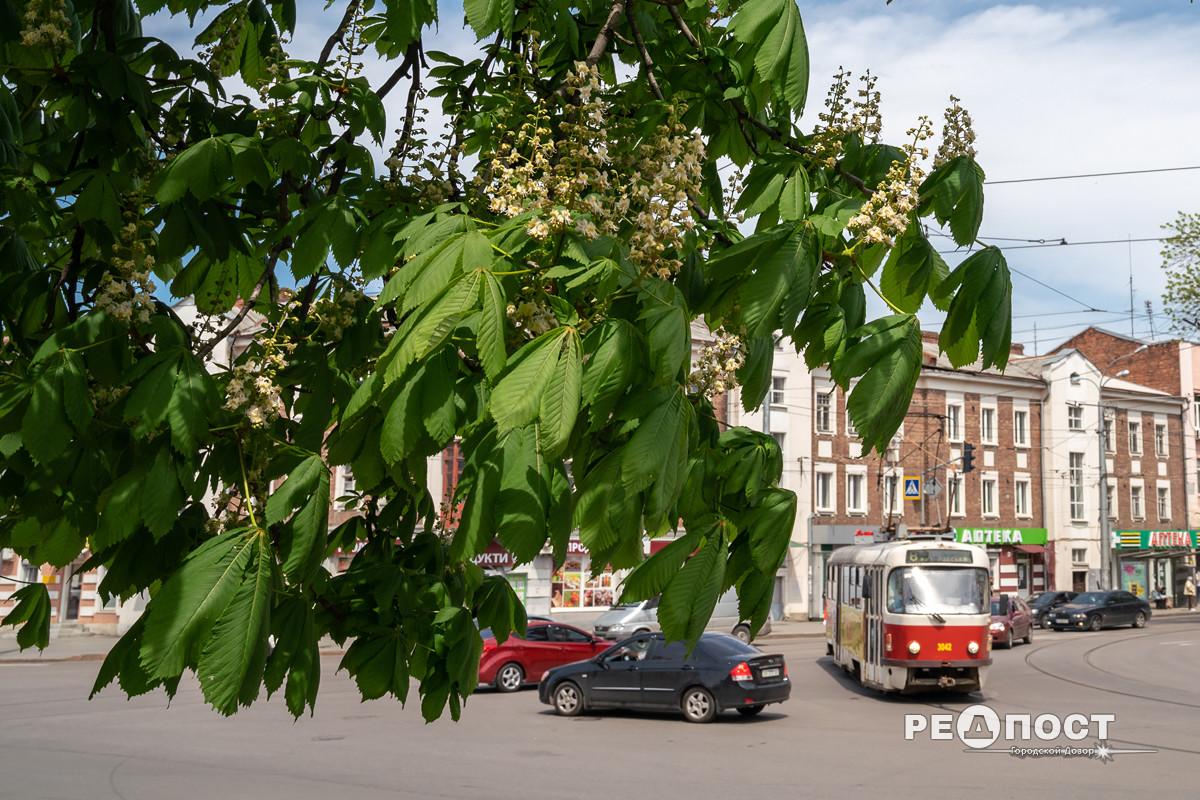 Каштаны, трамвай, Харьков