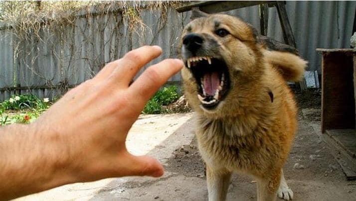 В Харькове и области участились случаи нападения собак на людей