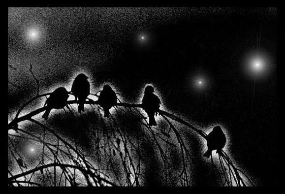 Воробьиные ночи
