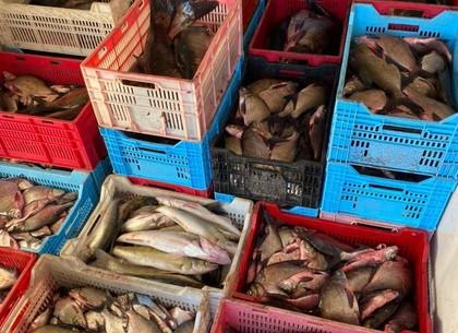 В супермаркетах Харькова тоннами продавали рыбу от браконьеров (видео, фото)