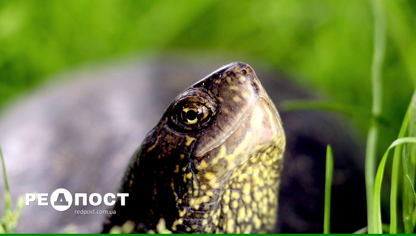 Харьковский зоопарк выпустил болотных черепах в естественную среду