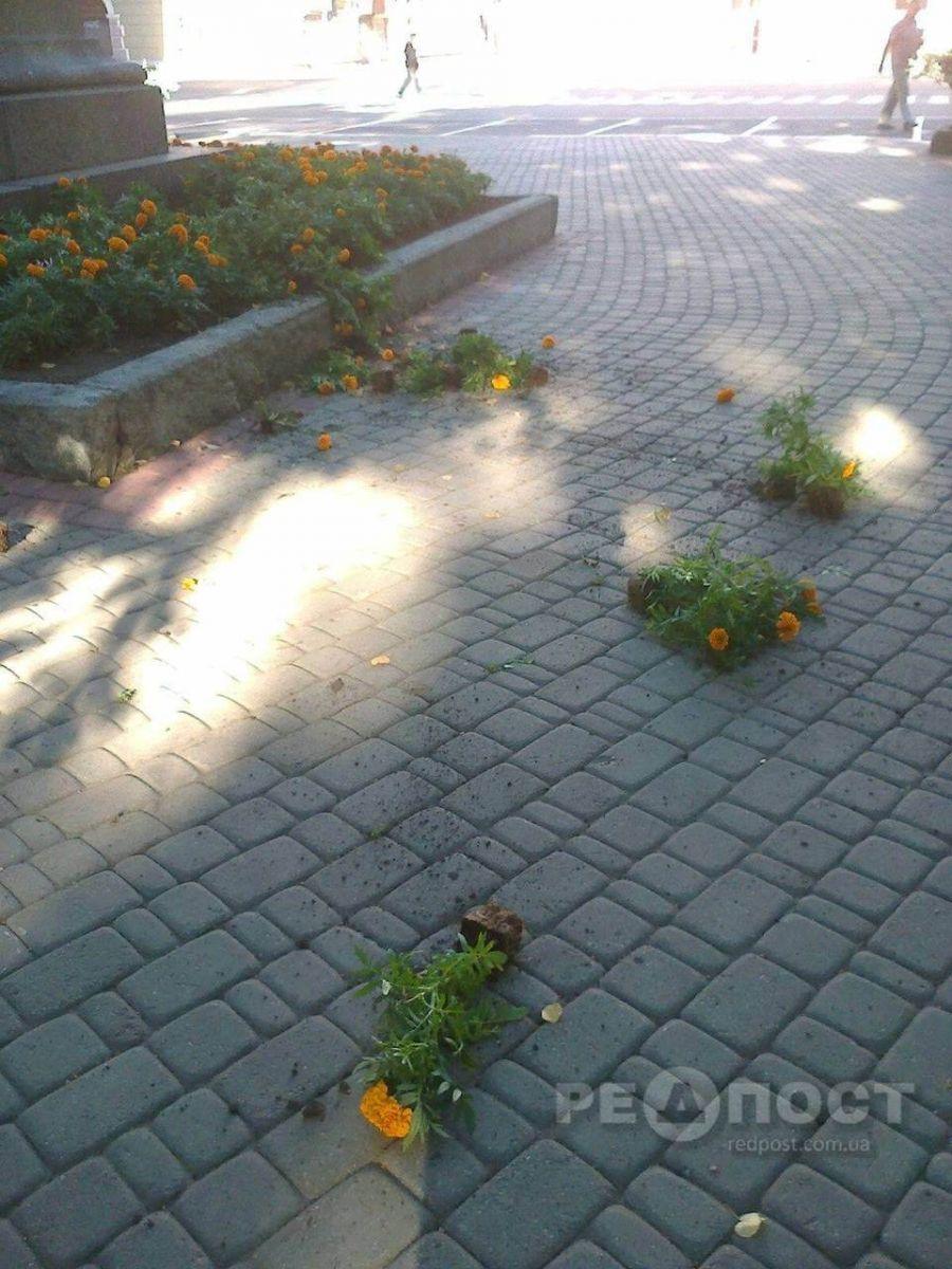 В центре Харькова вандалы уничтожили цветочную клумбу