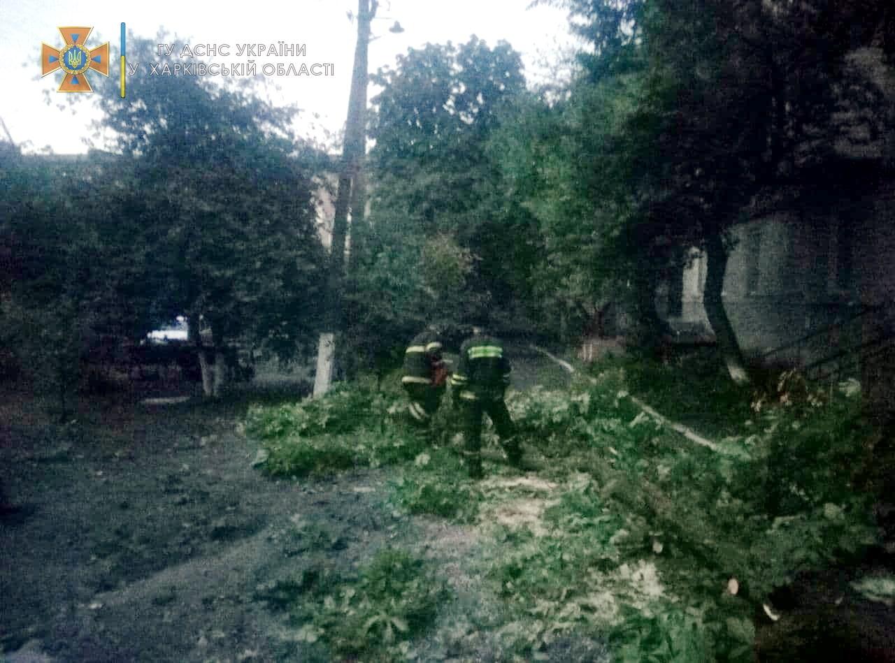 Шквальный ветер на Харьковщине повалил деревья. Новости Харькова