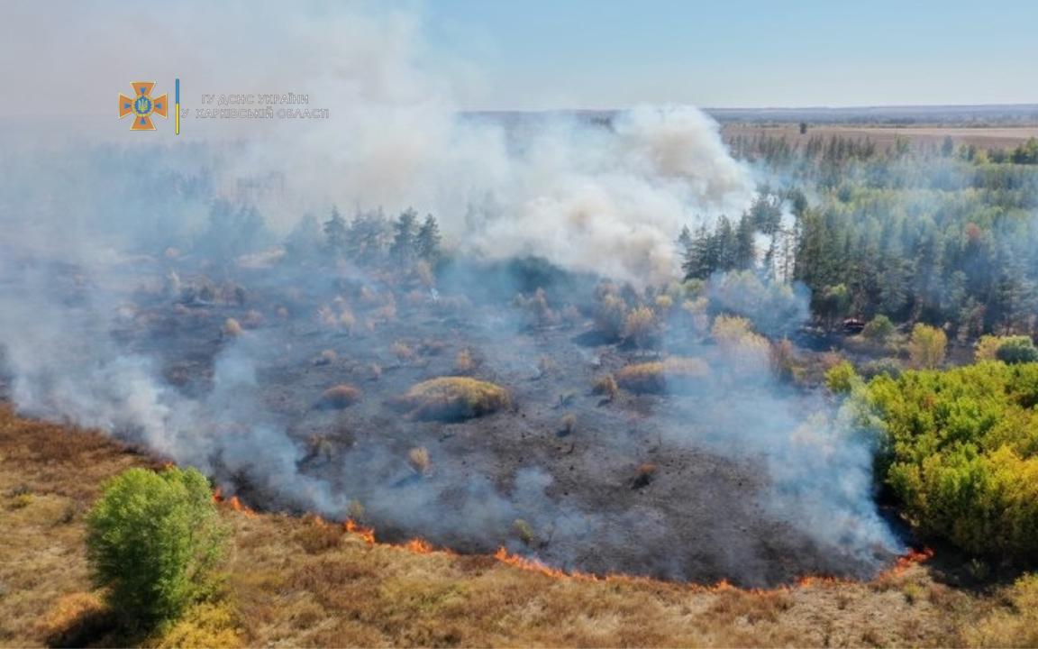 В Харьковской области горел лес
