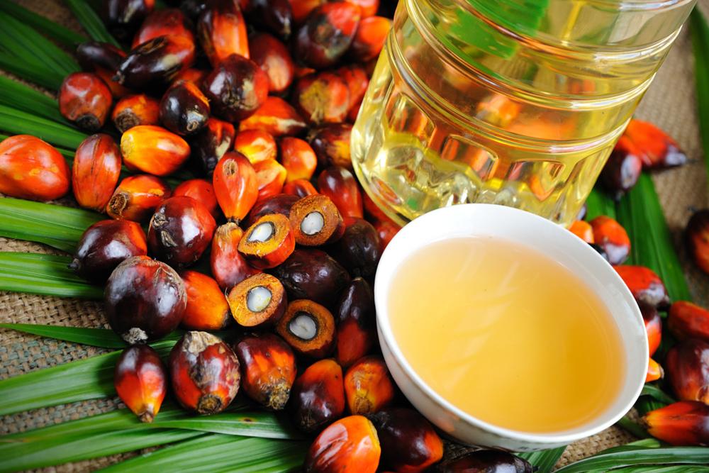 В Украине хотят запретить пальмовое масло